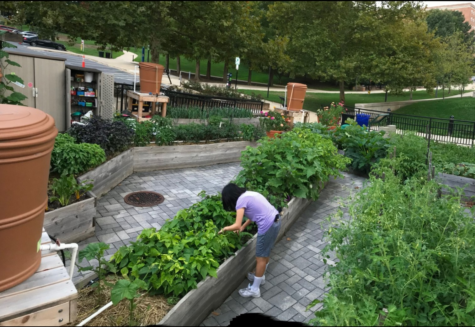 University of Maryland Community Learning Garden in College Park, MD